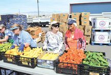 No Waste Produce Market On the Move (NoW MOM)