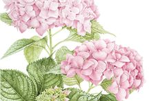 botanical prints / Special focus on home garden plants (including fruits and vegetables)