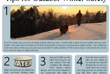 Winter Care for Your Animals