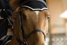 horse crochet
