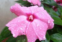My photos - Flowers / Foto scattate e modificate da me a fiori