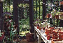 Garden Greenhouse Ideas / by Kim Ohrling