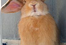 Rabbits / by Karen Lesure