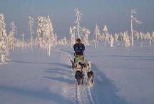 Huskytouren Lappland / Unsere gutmütigen Huskies und die grosse Erfahrung unserer Wildnisführer erlauben es Ihnen Hundeschlittentouren unterschiedlicher Art und Länge durch die faszinierende Wildnis zu erleben. Wildact stellt Ihnen für alle Touren die benötigte Ausrüstung kostenlos zur Verfügung