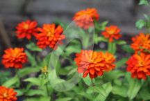 New Seeds Added for 2018 / Fab new seeds we have added to our Growing Seed Range
