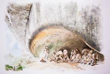 Homo neanderthalensis in Friuli