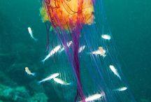 Wunderbare Meereswesen