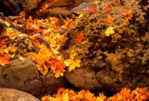 Fall colors / True color with the warmth of the season will warm your heart / by Robert Scott