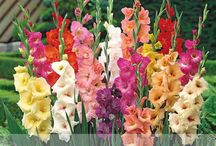 kvety a iné na aliexpresse