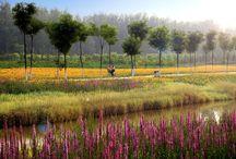 Ecological parc