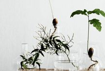 Vaser och växter