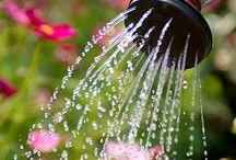 garden organic, farming / uprawa