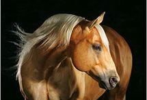 Horses / by Debra Steeves