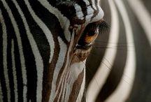 Animal kingdom / by Thierry Joli