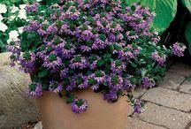 Blomster/planter