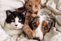 Tiere ❤️❤️