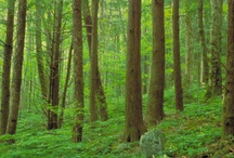 Friends Of Forests / by GlobalCofe