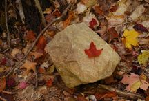 Fall colours in Ontario Parks
