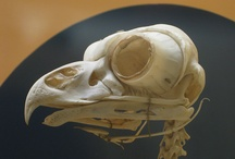 I want to live in a museum: skulls, taxidermy, & oddities / things the scare & inspire  / by Niki-Su Gratton