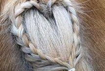 Dingen voor in manen en staart van paarden ❤️❤️