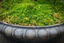 Garden Studio - Pots and Planters