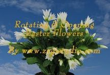 Easter Plants Video / Time-lapse of video clips with Easter plants and flowers