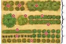 gardening/kertészkedés