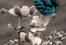 Butterflies / by Jen