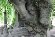 fák furcsa külsővel