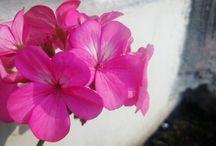 The Power of Flower  / Flower is Power in Beautiful