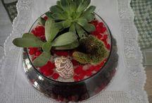 terrario succulentas