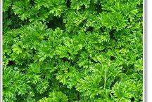 Herbs / by Michelle Reid Lee