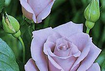 flowers / kwiaty