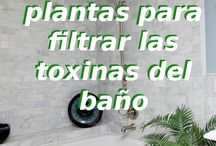 Plantas para baño