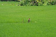 Indonesia / Bali Lombok 2010