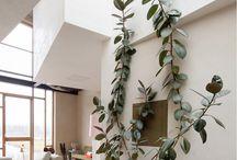 | INDOOR PLANTS |