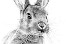 drawing rabbit