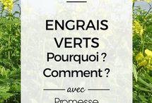 engrais verts / engrais verts : utilisation, variétés et usages