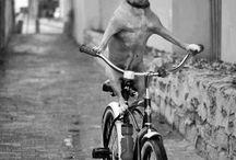 animali teneri / by Enza Giannone