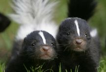 Research: Skunks