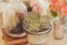 succulent (details & tablescapes)