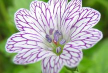 """Garden plants wish list / Plants I don't have in the garden... yet. I hope to move a lot of these pins to my board """"Flowers in my garden"""" this year!"""