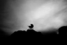 horror / by Paul Michael Woodward