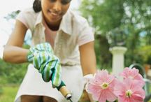 Lawn and Garden / Way to improve your outdoor space. Explore these gardening ideas and tips, such as easy household plants, exotic flowers, fertilizing trees and more.
