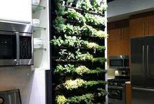 kitchen garden