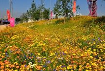 gardens / planting themes