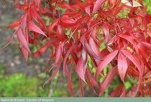 P O R T U G A L  Native Flora