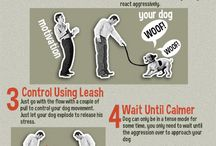 Dog Training And Caring / by abby Campos