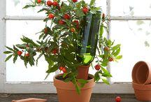 #plantas