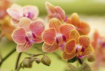 cura della orchidea